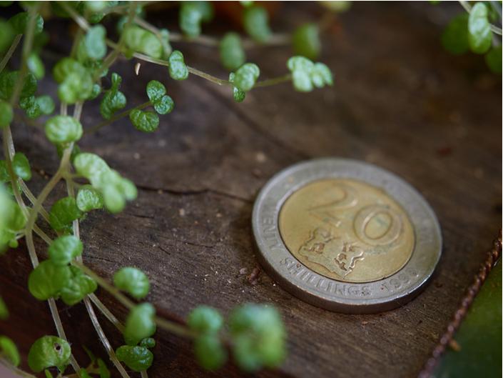 【2018年9月最新版】1円以下で買える草コイン時価総額ランキングTOP20